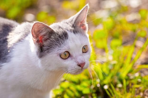 Gato malhado de branco olhando de perto no jardim em dias de sol