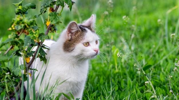 Gato malhado de branco olhando de perto no jardim perto do mato