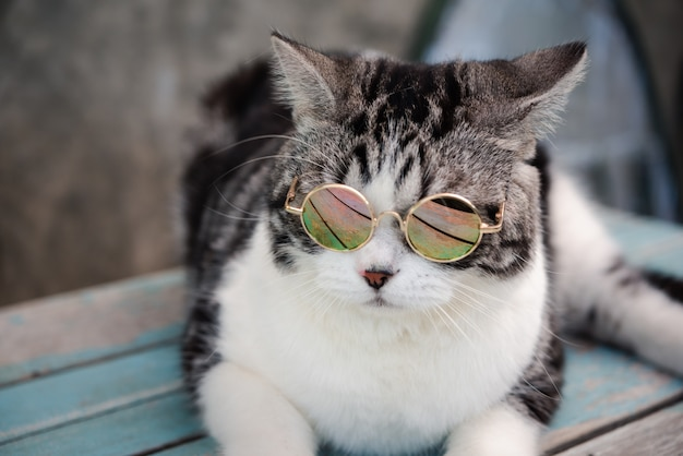Gato malhado de óculos sentado na mesa de madeira azul