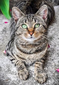 Gato malhado de olhos verdes fechar retrato