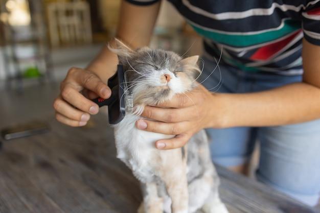 Gato malhado deitado na mesa no salão de cabeleireiro de gatos enquanto era escovado e penteado com foco seletivo