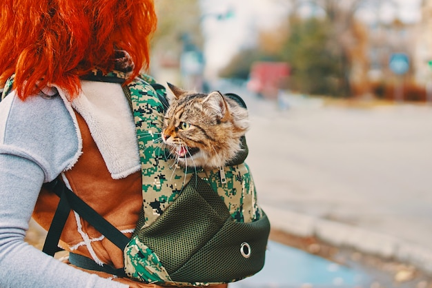 Gato malhado em um saco.