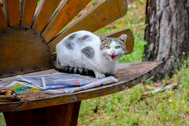 Gato malhado lendo jornal no banco.