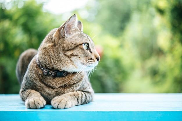 Gato malhado no chão de cimento azul e olhando para a esquerda