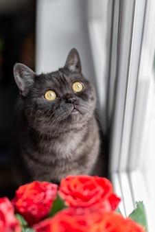 Gato malhado preto com olhos amarelos sentado no parapeito da janela