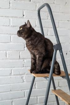 Gato malhado preto engraçado sentado no topo de uma escada contra uma parede de tijolos pintados de branco