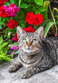 Gato malhado sentado no jardim com rosas vermelhas