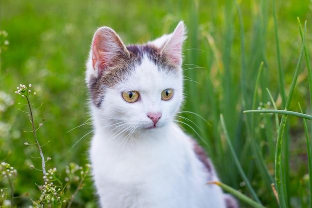 Gato manchado de branco no fundo da grama verde no jardim_