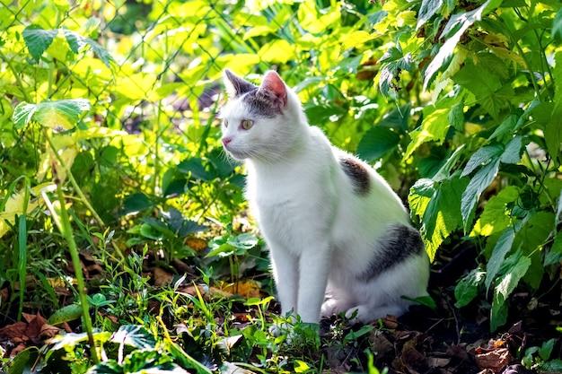 Gato manchado de branco sentado no jardim entre arbustos verdes