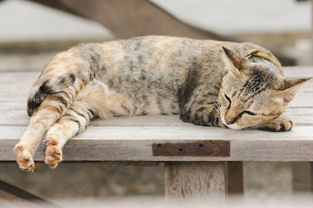 Gato marrom deitado em uma cadeira de madeira velha