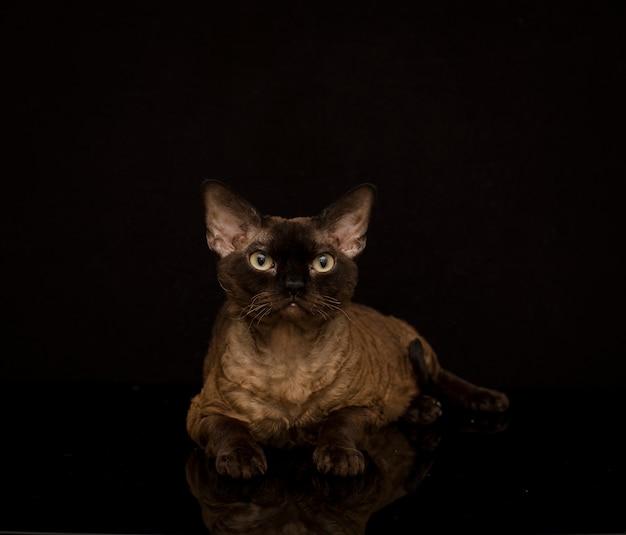 Gato marrom mágico com olhos verdes