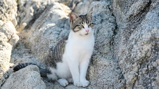 Gato multicolorido deitado nas rochas perto da costa do mar egeu, na grécia