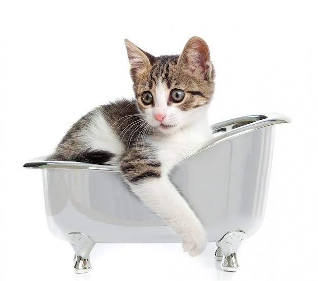 Gato na banheira
