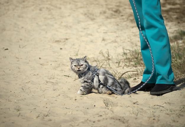 Gato na coleira.