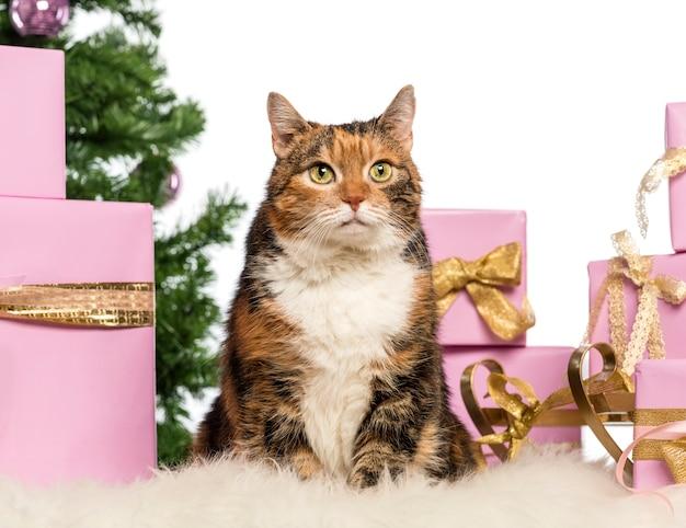 Gato na frente de decorações de natal