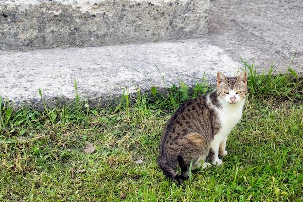Gato na grama em frente da casa