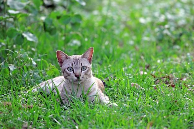 Gato na grama