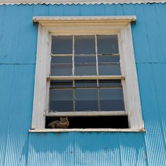 Gato na janela de uma casa, valparaíso, chile