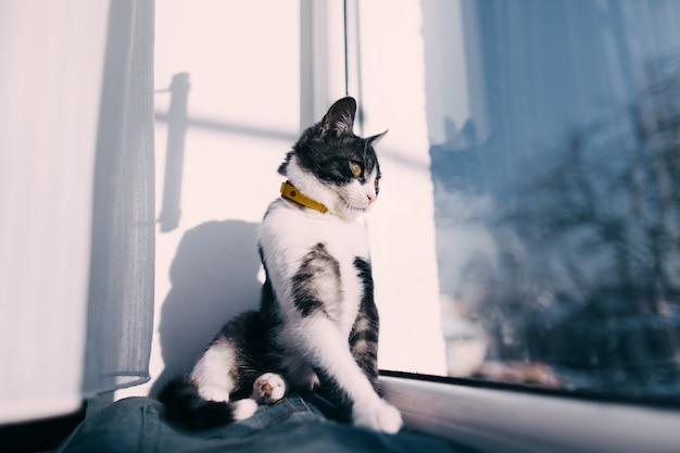 Gato na janela. inverno
