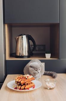 Gato na mesa com waffle