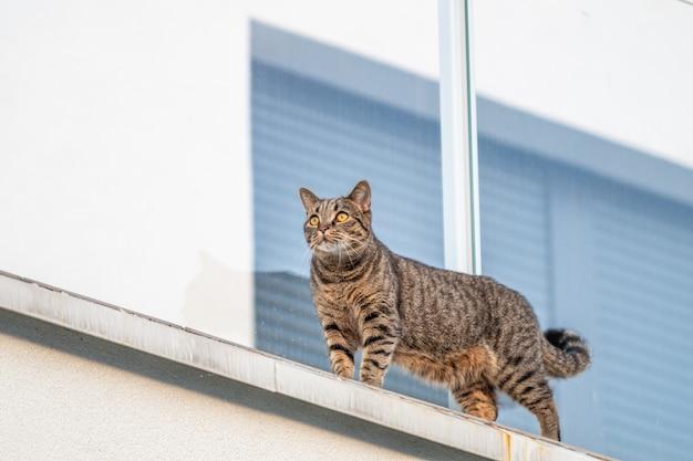 Gato na parede branca com uma janela na superfície