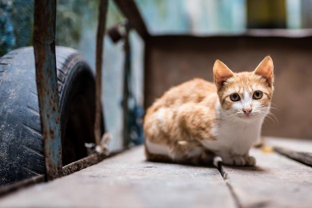 Gato na rua em um carrinho de mão