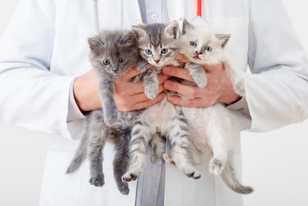 Gato nas mãos do médico veterinário. médico veterinário examinando três três gatinhos. gatos bebês na clínica veterinária. remédio veterinário para animais de estimação e gatos. retrato de animais gatinhos.