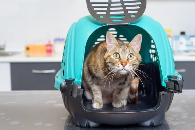Gato no canil na clínica veterinária