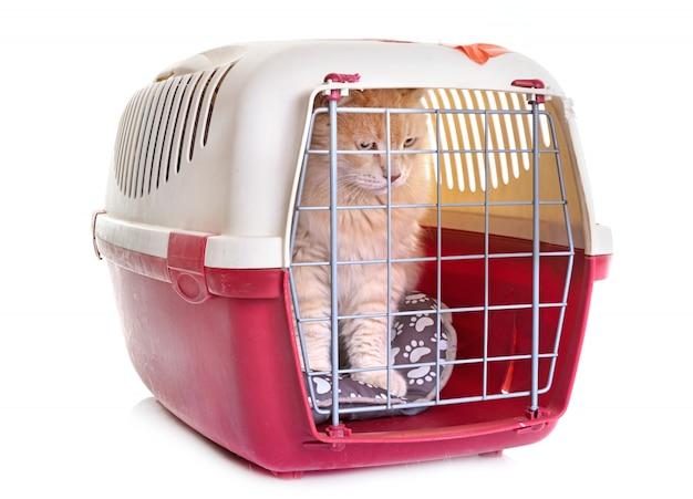 Gato no canil