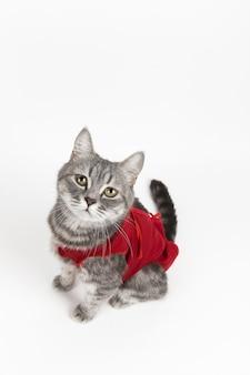 Gato no cobertor médico vermelho para gatos, isolado no branco