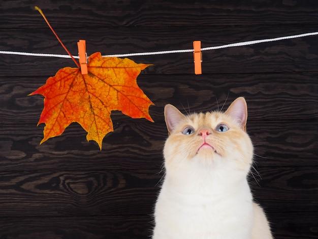 Gato no fundo da folha de outono