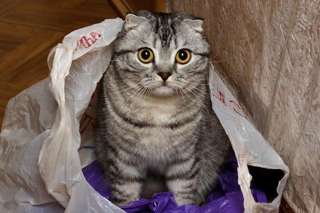 Gato no pacote em casa. gato da curiosidade