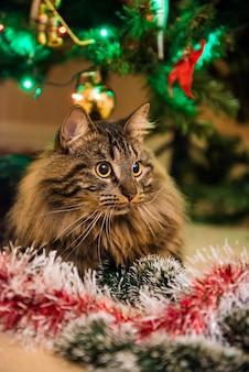 Gato norueguês engraçado com guirlandas sob a árvore de natal no ano novo