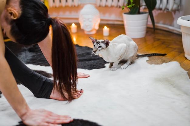 Gato olhando mulher fazendo yoga