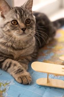 Gato olhando para longe e sentado em um mapa