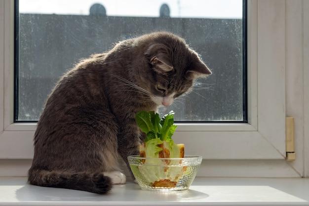 Gato olhando para o crescimento de repolho chinês em uma tigela de vidro no parapeito de uma janela. usar restos de vegetais para cultivar vegetais orgânicos em casa.