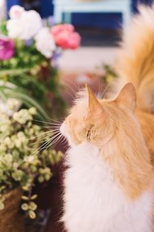 Gato olhando planta