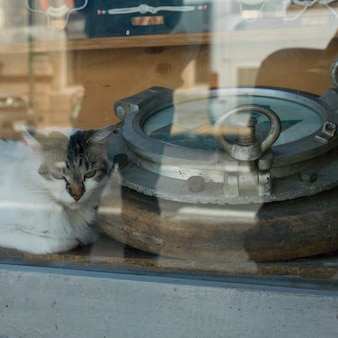 Gato, olhar, de, um, janela, valparaiso, chile