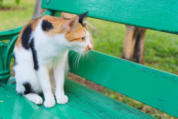 Gato olhou através da cadeira