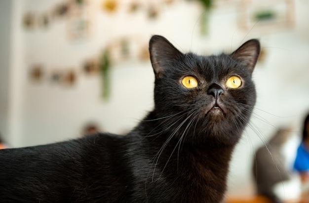 Gato olhou com atenção