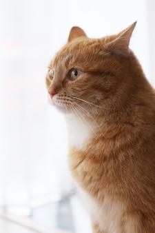 Gato peludo fofo