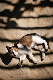 Gato pequeno relaxante conceito ao ar livre