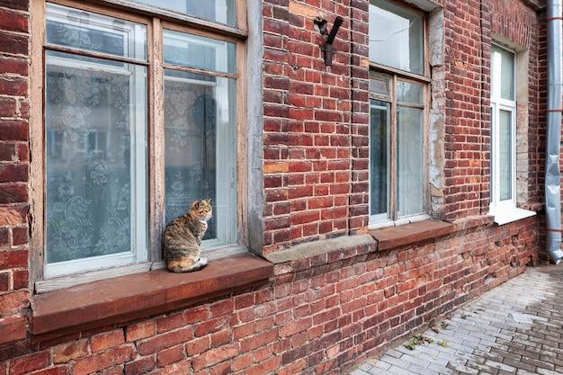 Gato perdido sentado no parapeito de uma janela do lado de fora de uma velha casa de tijolos gato na janela