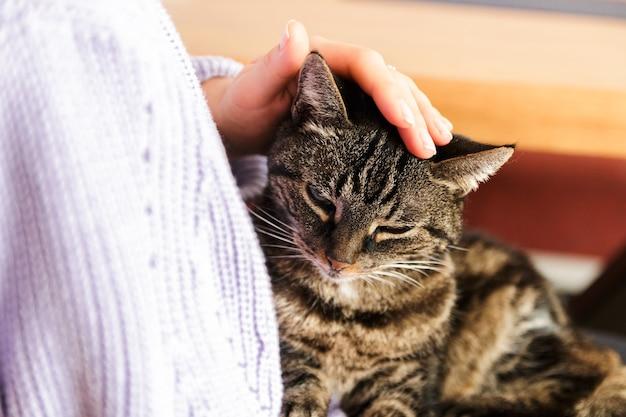 Gato perdido solitário nos braços humanos, sentindo-se amado.
