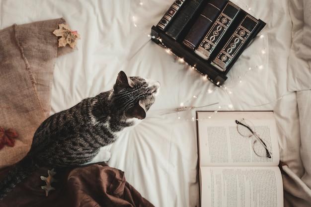 Gato perto de livros e óculos