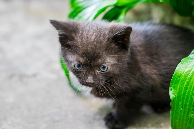 Gato preto andando na rua, grama verde