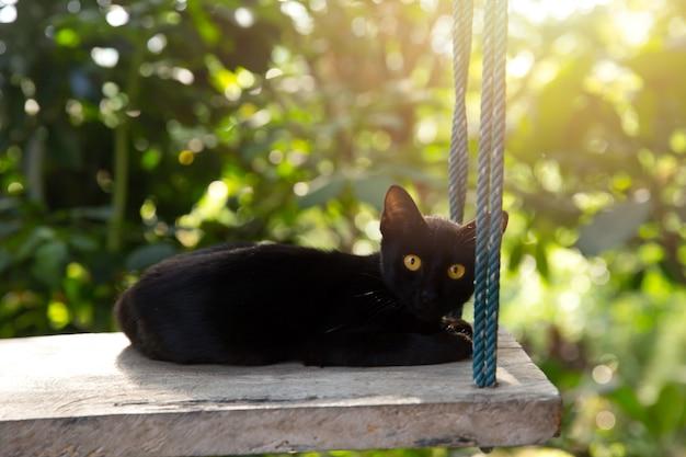 Gato preto, animal selvagem na natureza.
