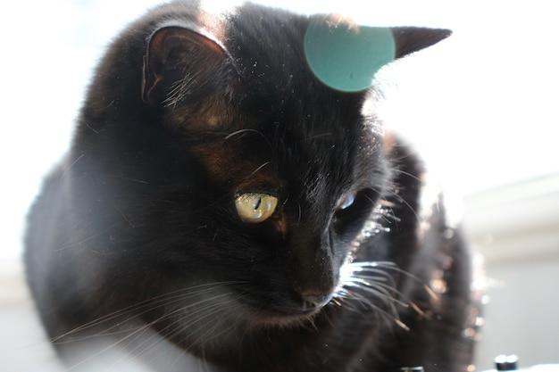 Gato preto com bokeh