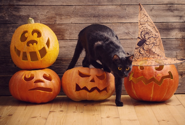 Gato preto com laranja abóbora de halloween na madeira