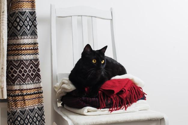 Gato preto com roupas de inverno em uma cadeira